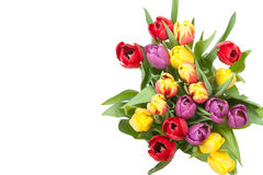 Assorted Tulips Bouquet. Isolated On White Background. Top View Royalty Free Stock Photography