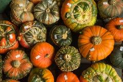 Assorted Turban Squash Pumpkins Stock Photos