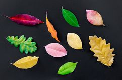 Assorted Types Of Leaves On Black Surface Stock Photography