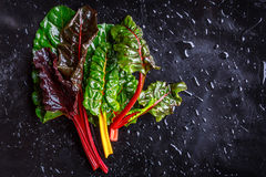Assorted varieties of chard Royalty Free Stock Photos
