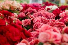 Assorted Varieties of Flowers Stock Photo