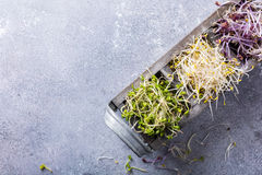 Assorted vegetable sprouts Stock Image