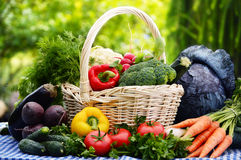 Assorted vegetables in wicker basket in the garden Royalty Free Stock Images