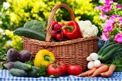 Assorted vegetables in wicker basket in the garden Stock Images