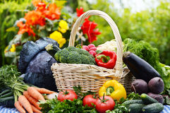 Assorted vegetables in wicker basket in the garden Royalty Free Stock Photography