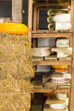 Assorted wheels of cheese on rustic wooden shelves Stock Images