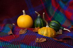 Assorted yellow and green gourds with leaves on plaid fabric. Assorted yellow and green ornamental gourds with autumn leaves on a warm red plaid fabric Stock Images