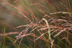 Assortement of long grasses Stock Photography