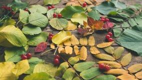 Assortiment abstrait de baies de feuilles d'automne Image stock