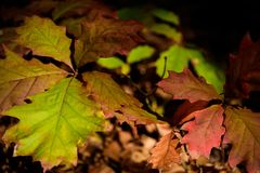 Assortiment d'Autumn Leaves photographie stock