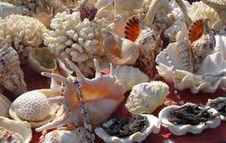 Assortiment des coquilles et du corail Photo libre de droits