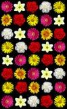 Assortiment des fleurs images libres de droits