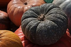 Assortiment divers des potirons Potiron gris Potiron peu commun de couleur Autumn Harvest Images stock