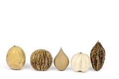 Assortiment van noten op shells achtergrond Royalty-vrije Stock Foto