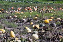 Assortiment van oranje pompoenen in de dorpskeuken plantaardig g royalty-vrije stock afbeeldingen