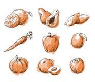 Assortiment van oranje voedsel, fruit en vegtables, vectorschets Royalty-vrije Stock Afbeelding