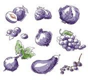 Assortiment van purper voedsel, fruit en vegtables, vectorschets Stock Afbeelding