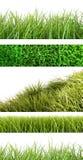 Assortiment van verschillend gras op wit Royalty-vrije Stock Foto's