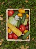 Assortimento degli ortaggi freschi in una scatola di legno immagini stock libere da diritti