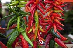 Assortimento dei peperoni di peperoncino rosso su una stringa Fotografia Stock Libera da Diritti