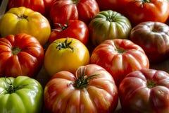 Assortimento dei pomodori freschi di cimelio immagini stock
