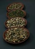 Assortimento dei tè verdi Fotografie Stock Libere da Diritti