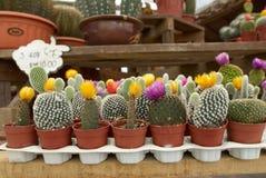 Assortimento del cactus Fotografia Stock
