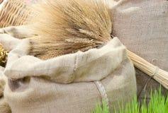 Assortimento del cereale Immagini Stock Libere da Diritti