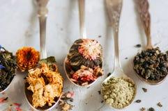 Assortimento del tè verde asciutto del fiore e di erbe in cucchiai su w Immagine Stock Libera da Diritti