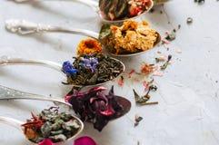Assortimento del tè verde asciutto del fiore e di erbe in cucchiai su w Immagine Stock