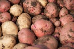 Assortimento della patata Immagini Stock Libere da Diritti