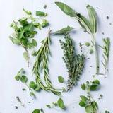 Assortimento delle erbe fresche Immagine Stock Libera da Diritti