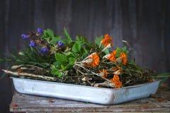 Assortimento delle erbe fresche Fotografia Stock
