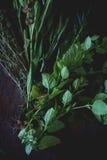 Assortimento delle erbe fresche Immagine Stock