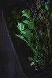 Assortimento delle erbe fresche Fotografia Stock Libera da Diritti