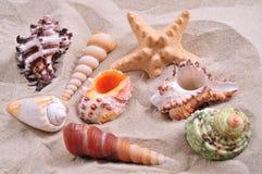 Assortimento delle stelle marine e dei seashells Fotografie Stock Libere da Diritti