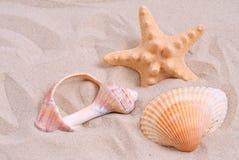 Assortimento delle stelle marine e dei seashells Fotografia Stock Libera da Diritti