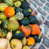 Assortimento delle zucche, zucche Raccolto autunnale, mercato Fotografie Stock Libere da Diritti