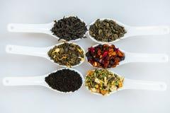 Assortimento di tè asciutto Vari generi di tè isolati su bianco Generi differenti di foglie di tè Composizione nel tè con il gene Fotografia Stock Libera da Diritti