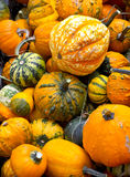 Assortimento variopinto delle zucche sulla stagione di autunno Immagine Stock