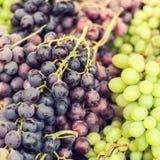 Assortito organico dell'uva matura su un mercato locale dell'agricoltore guar Immagini Stock Libere da Diritti