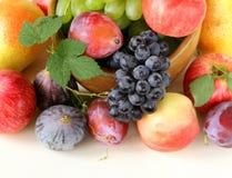 Assortment autumn harvest fruit Stock Photos