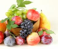 Assortment autumn harvest fruit Royalty Free Stock Images