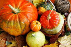 Assortment of autumn pumpkins Stock Images