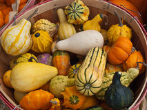Assortment of Autumn Squash in a Bushel Basket Stock Photography