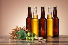 The assortment of beer and brewing ingredients Stock Photos