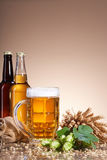 The assortment of beer and brewing ingredients Stock Images