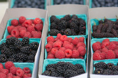 Assortment of Berries at a Farmers Market in California: Raspberry, Blackberries, Blueberries, Mulberries Royalty Free Stock Images