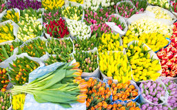 Assortment of bouquets of colorful tulips in a farmers market Royalty Free Stock Images