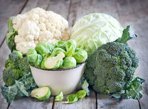 Assortment of cabbages Stock Images